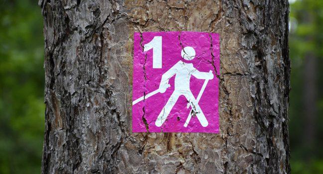 Nordic Walking- sport idealny
